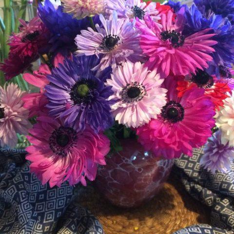 fullstar anemone